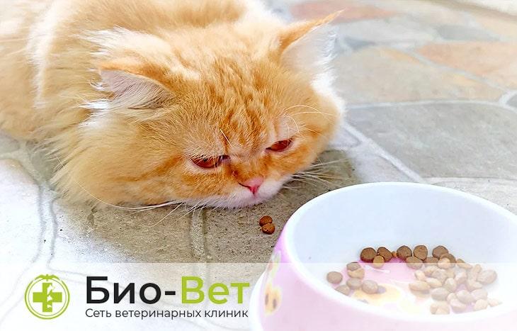 Кошку рвет желтой жидкостью