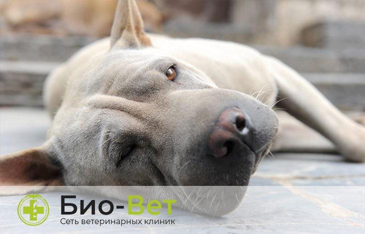 Судороги у собак