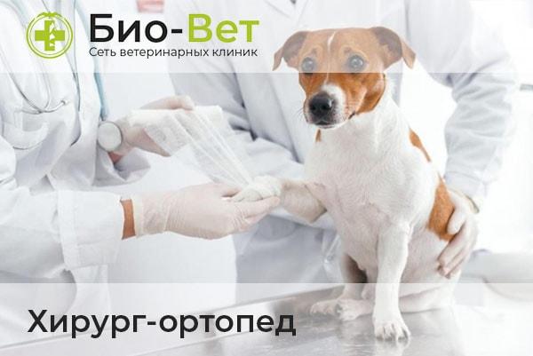 Ветеринары Хирурги-Ортопеды