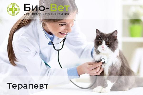 Ветеринары-Терапевты
