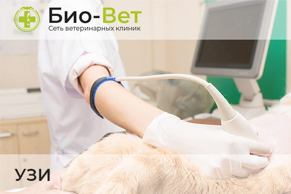 Ветеринары УЗИ