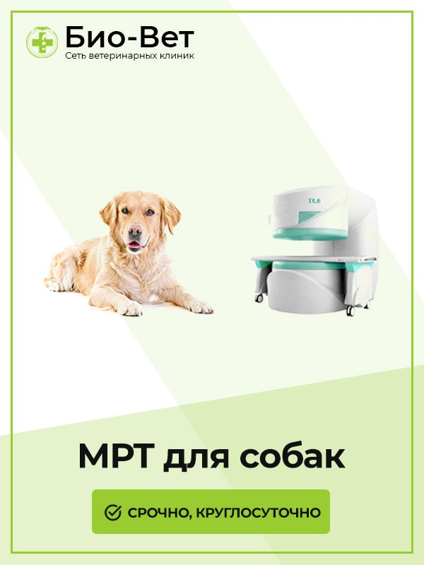 МРТ Собаке в Москве